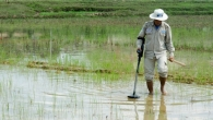 Handicap International's deminer searches for cluster bombs in a rice paddy.